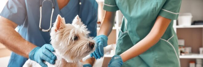 Independent Veterinary Practices Find a Voice with IVPA
